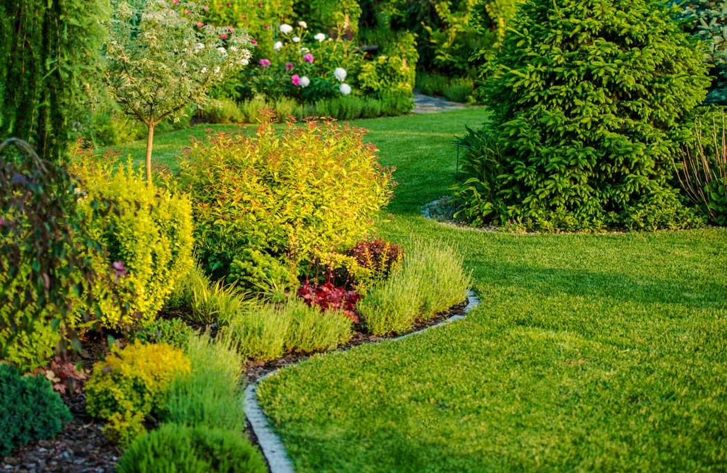 healthy garden bed