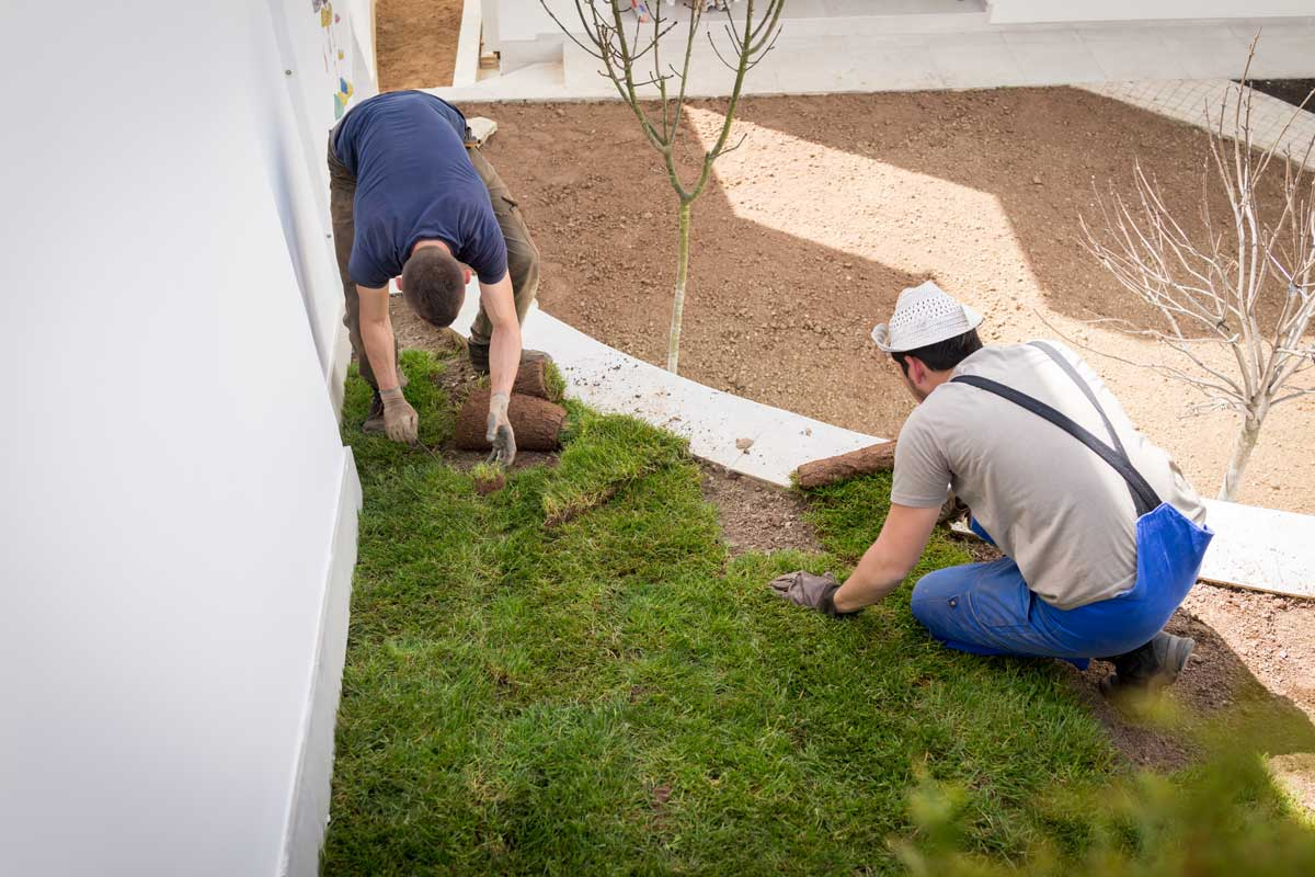 two landscape gardeners laying turf